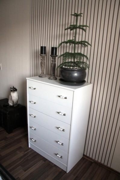Zimmertanne und Katze