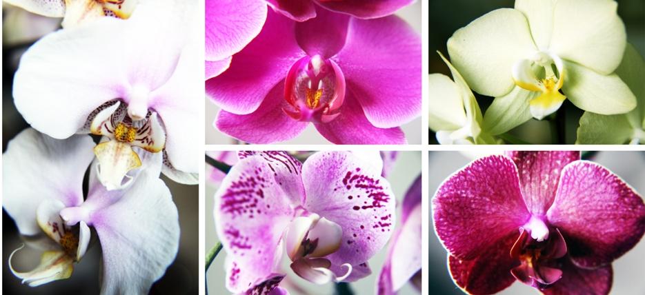 orchideen kosmonautin. Black Bedroom Furniture Sets. Home Design Ideas