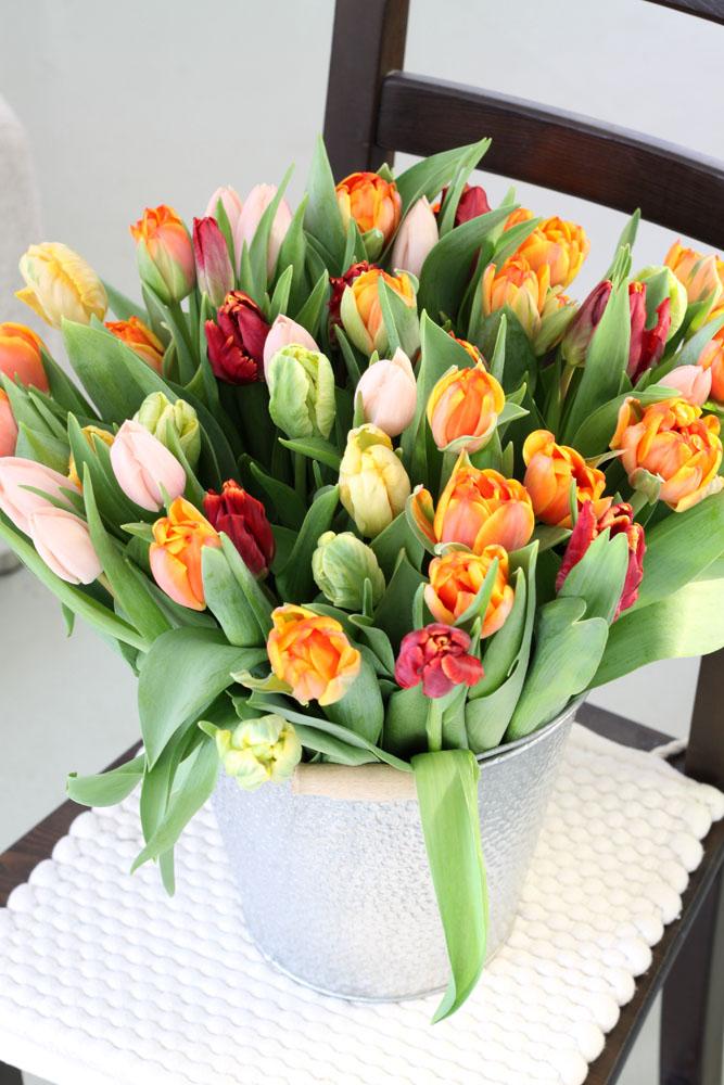 Topf mit Tulpen