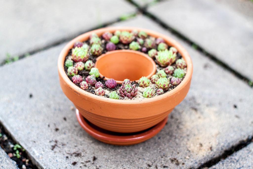 Sukkulenten in Keramiktöpfen